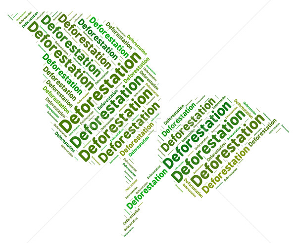 Deforestation Word Shows Clear Forests And Copse Stock photo © stuartmiles