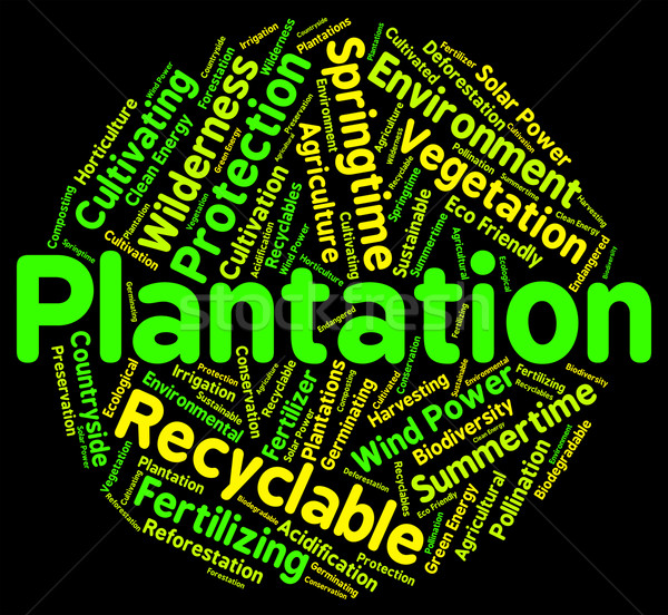 Plantation Word Means Farms Ranches And Farming Stock photo © stuartmiles