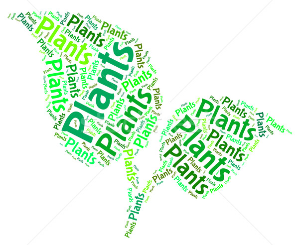 Plants Word Shows Text Botany And Foilage Stock photo © stuartmiles