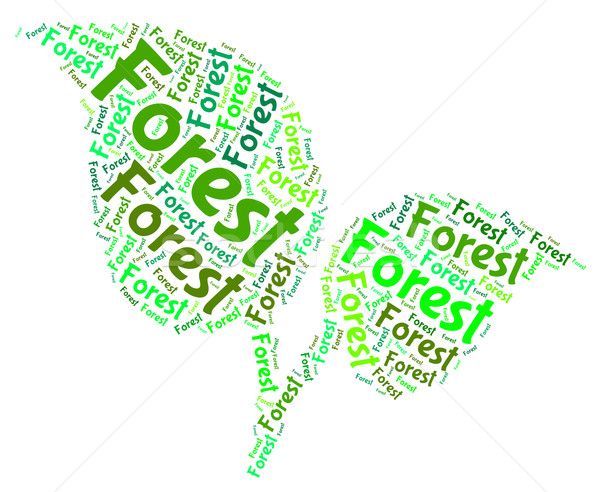Forest Word Indicates Forested Woodlands And Forestation Stock photo © stuartmiles