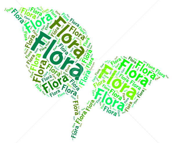 Stock photo: Flora Word Means Plant Life And Areas