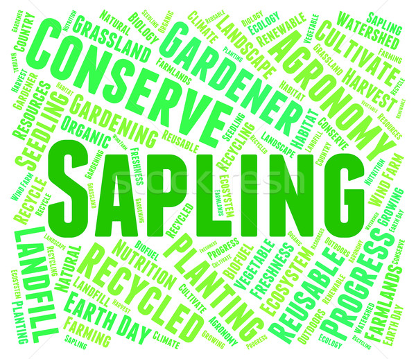 Sapling Word Means Tree Trunk And Cultivate Stock photo © stuartmiles