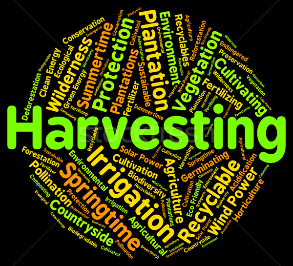 Harvesting Word Means Text Yield And Grain Stock photo © stuartmiles