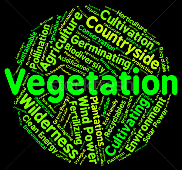 Vegetation Word Indicates Plant Life And Botany Stock photo © stuartmiles