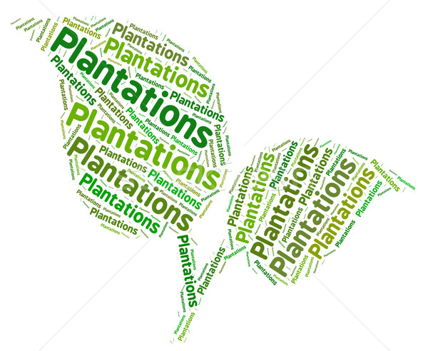 Plantations Word Shows Ranch Estate And Words Stock photo © stuartmiles