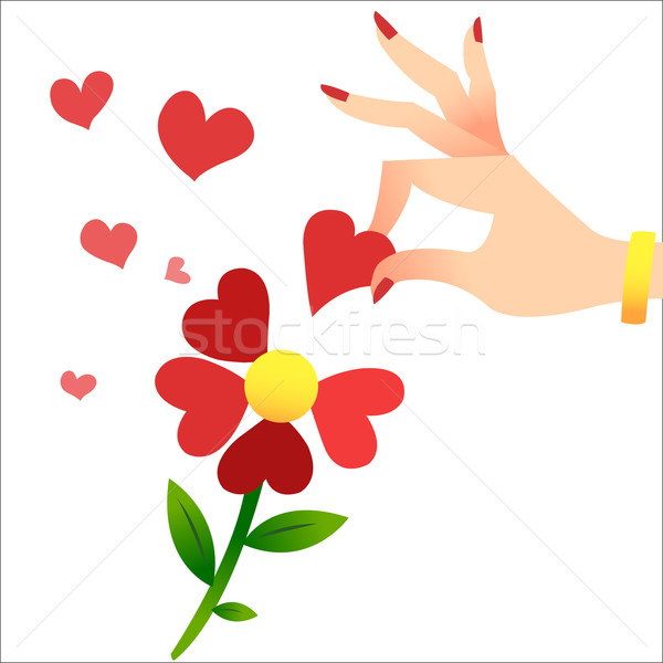 Guessing on the petals. A womans hand lifts the heart petals Stock photo © studiostoks