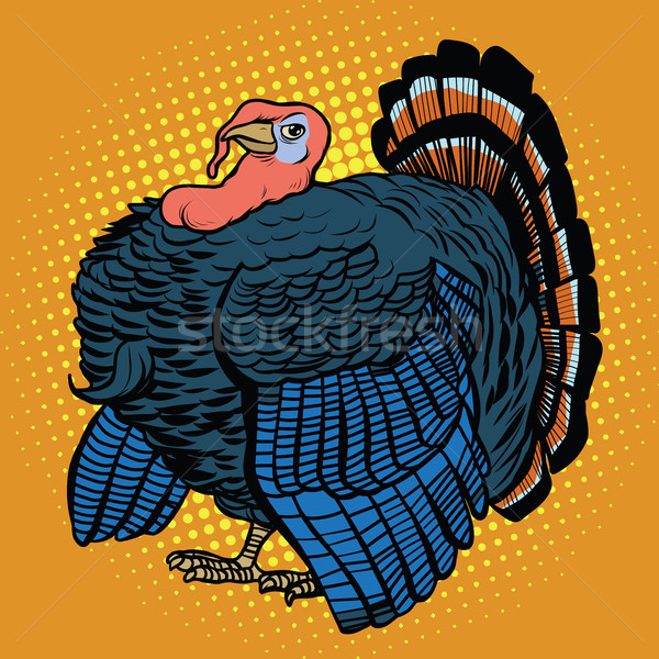 Poultry Turkey, realistic vector illustration Stock photo © studiostoks