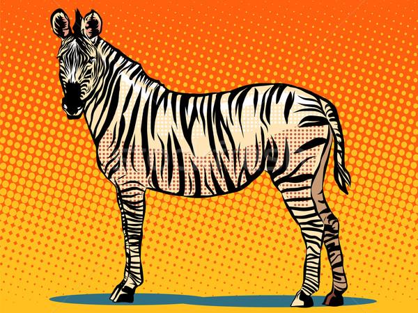 Afrikai zebra állat pop art retró stílus valósághű Stock fotó © studiostoks