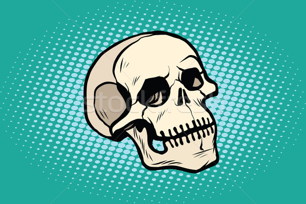 human skull head skeleton Stock photo © studiostoks