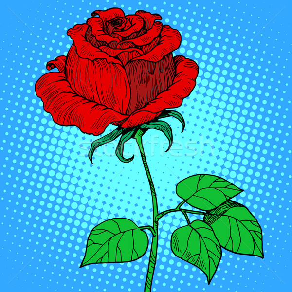 Rose red flower Stock photo © studiostoks