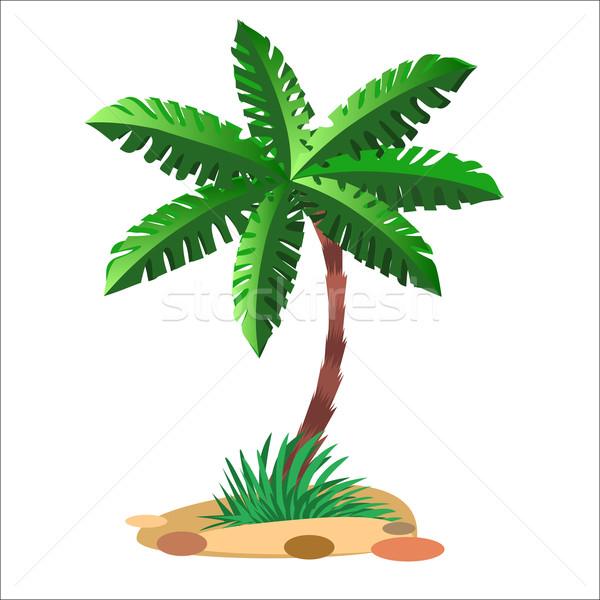 Verde palmeira neutro arenoso solo madeira Foto stock © studiostoks