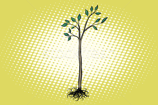 árvore plântula folhas verdes natureza ecologia Foto stock © studiostoks