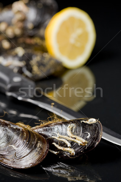 raw mussels from galicia spain in black background Stock photo © Studiotrebuchet