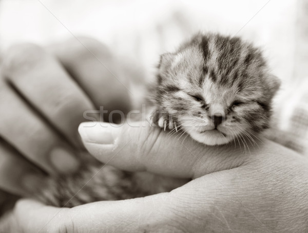 котенка стороны рук черно белые изображение Сток-фото © suemack