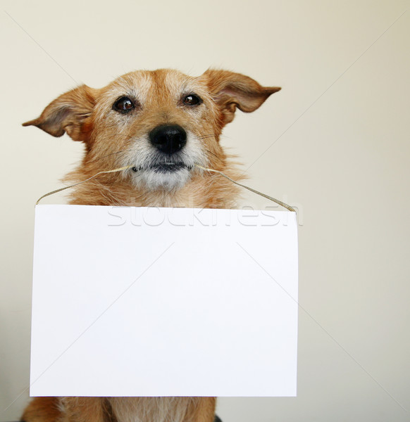 Stock photo: Dog with a blank sign
