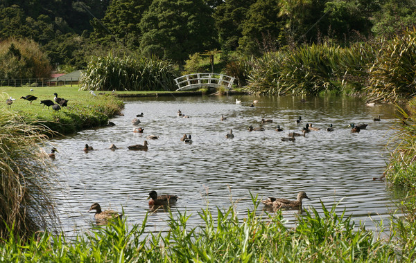 Новая Зеландия птица моста реке плаванию Сток-фото © suemack