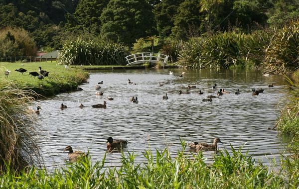 Wetland area New Zealand Stock photo © suemack