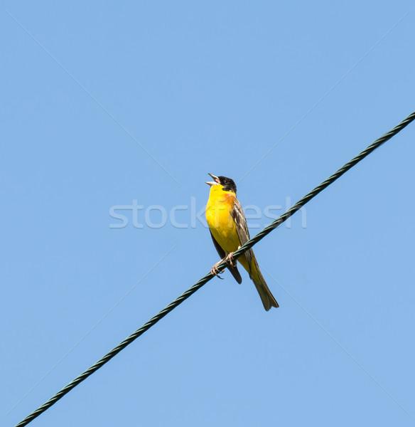Homme fil grec île nature oiseau Photo stock © suerob