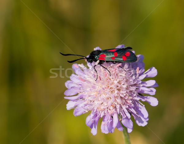 Domaine sussex Angleterre nature Photo stock © suerob