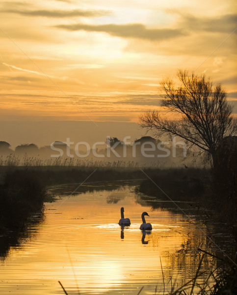 Swans and Pevensey Levels Dawn Stock photo © suerob
