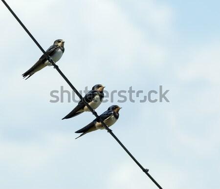Grange groupe jeunes oiseau fil saison Photo stock © suerob