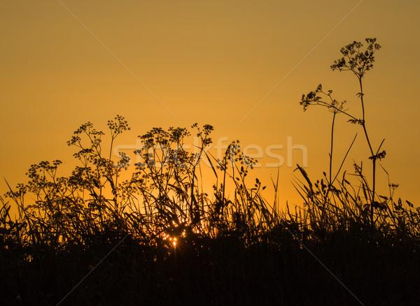 Gündoğumu siluetleri kır çiçekleri turuncu gökyüzü şafak Stok fotoğraf © suerob