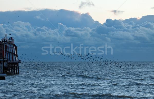Starlings at Dusk Stock photo © suerob