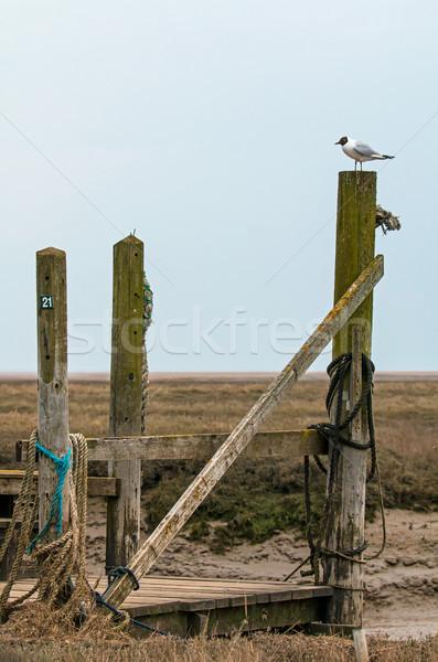 Black-headed Gull on Jetty Stock photo © suerob