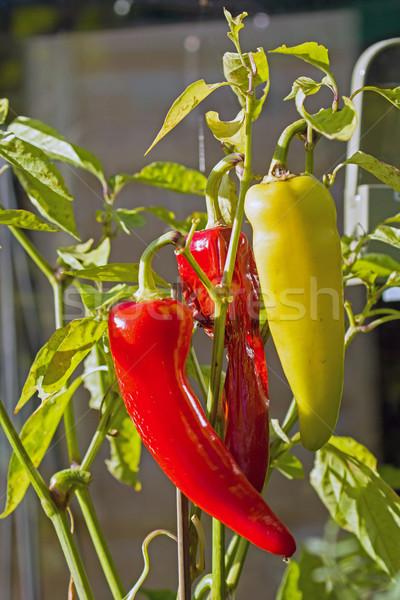 Sweet Banana Peppers Stock photo © suerob