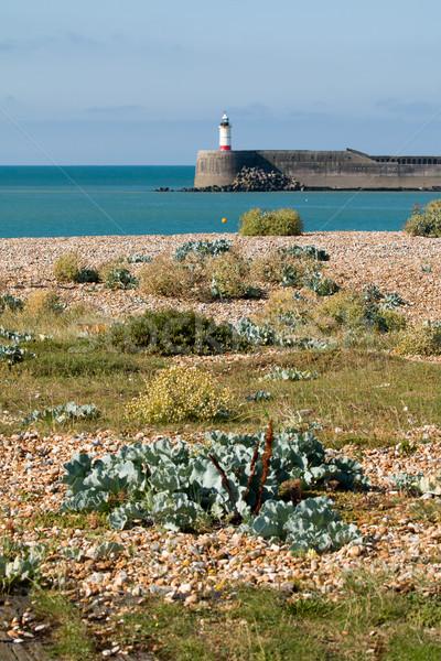 Rive plantes marée sussex port phare Photo stock © suerob