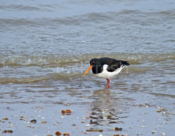 Sığ dalgalar deniz okyanus kuş sezon Stok fotoğraf © suerob