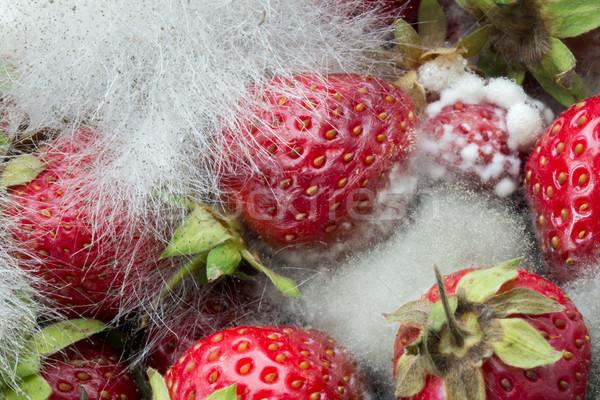 Aardbeien paddestoel groeiend natuur tuin aardbei Stockfoto © suerob