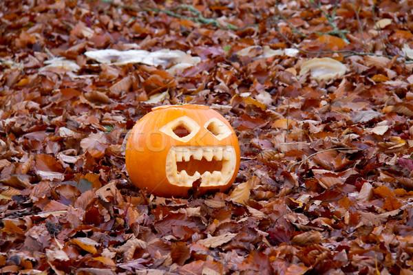 Citrouille laisse automne drôle Photo stock © suerob