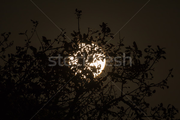 Hasat ay ağaçlar sussex İngiltere gökyüzü Stok fotoğraf © suerob