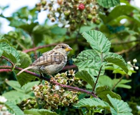 青 売り言葉 食品 雨 小 庭園 ストックフォト © suerob