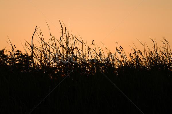 Sunrise herbe silhouettes fleurs sauvages orange ciel Photo stock © suerob