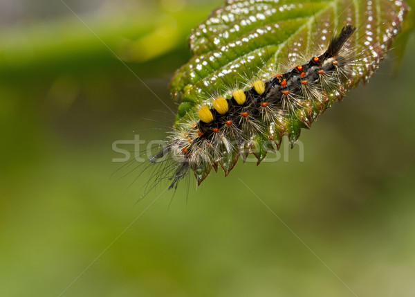 Rups blad natuur insect waarschuwing Stockfoto © suerob