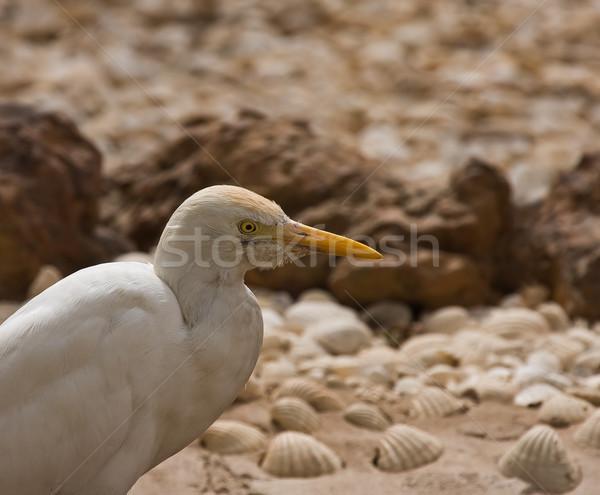 Vee hoofd shot afrikaanse wild vogel Stockfoto © suerob