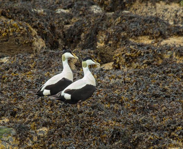 Photo stock: Deux · Homme · plage · nature · été · oiseau