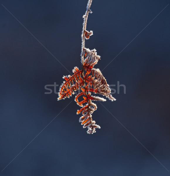 Don buz kış soğuk sezon kahverengi Stok fotoğraf © suerob