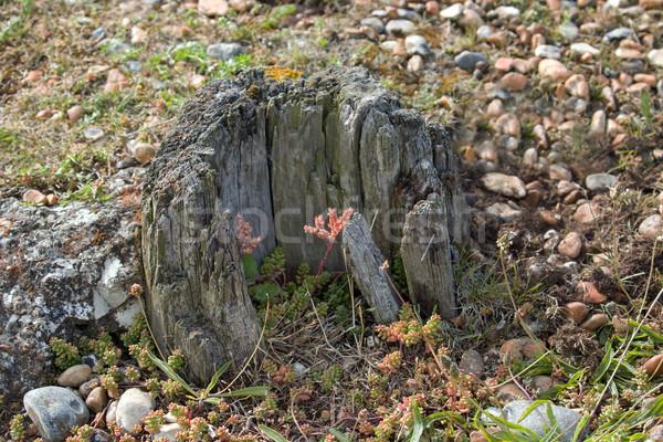 Kıyı bitkiler yulaf gelgit sussex Stok fotoğraf © suerob