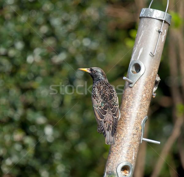 冬 羽 ヨーロッパの 黄色 シーズン ストックフォト © suerob