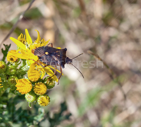Forêt bug nature insecte saison Photo stock © suerob