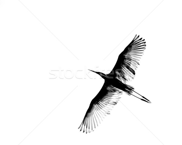 Great White Egret abstract Stock photo © suerob