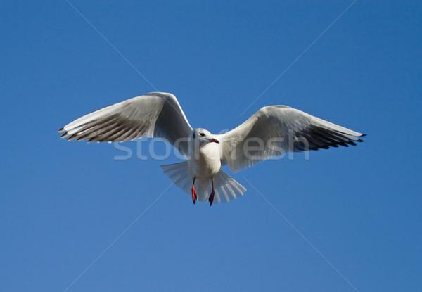 Kış tüyler mavi gökyüzü doğa kuş uçuş Stok fotoğraf © suerob