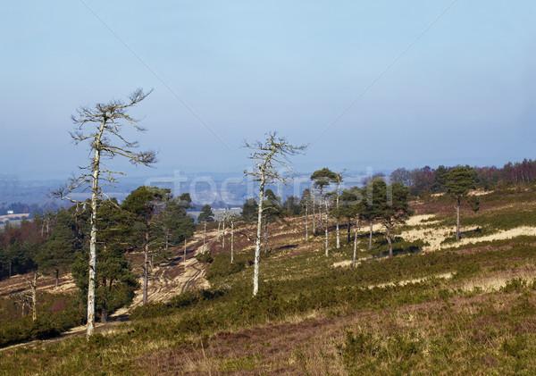 Forêt sussex emplacement écrit nature paysage Photo stock © suerob