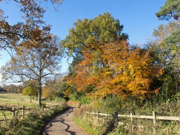 Vidék sáv ősz Sussex Anglia Stock fotó © suerob