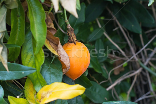 Passion fruits fruits orange fleur escalade usine Photo stock © suerob