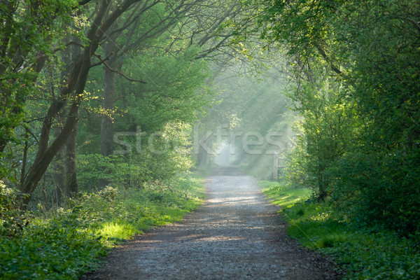 Countryside track and sunbeams Stock photo © suerob