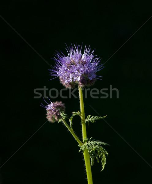 Usado agricultores verde estrume flor Foto stock © suerob